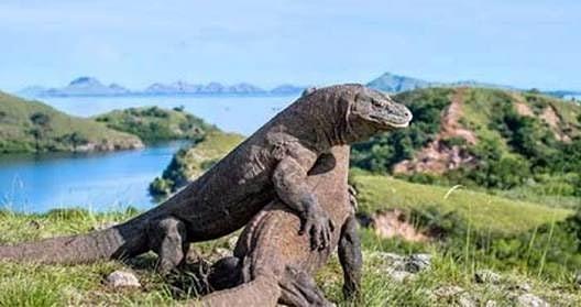 Pulau Komodo, sumber ig anjaniholidaytour