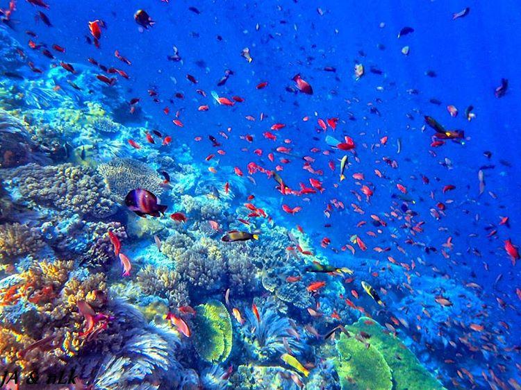Keindahan biota laut di batu bolong reef Labuan Bajo, sumber ig nanenlari