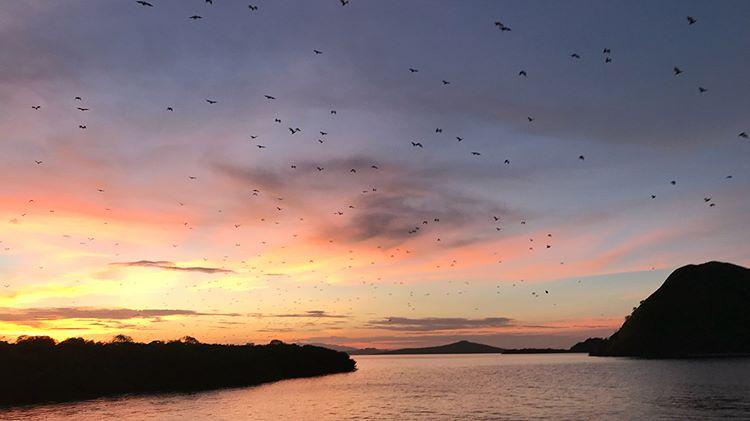Keindahan Pulau dan Alam Laut Koaba yang Menakjubkan