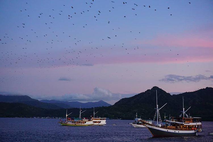 Foto kawanan kalong di pulau Kalong NTT, sumber ig @diiahekaa
