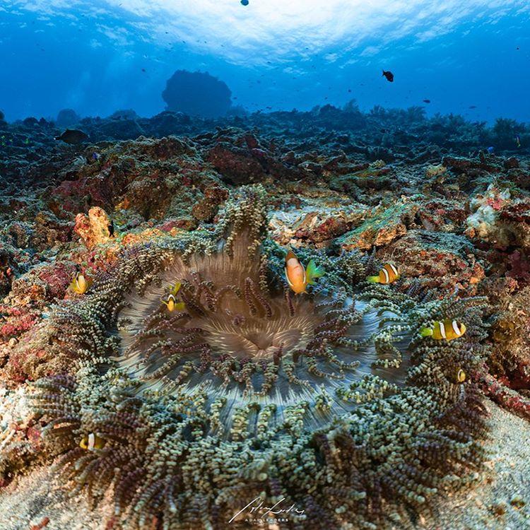 Pemandangan Laut Manta Poin, sumber ig meli.brindeau
