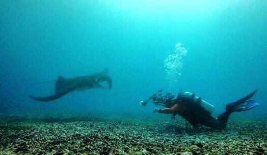 Scuba Diving Taka Makasar, sumber ig fredyadi