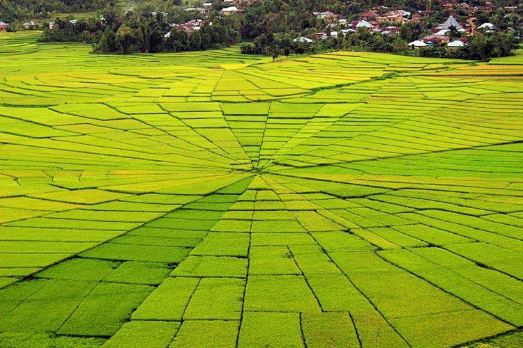 Sawah Lingko Labuan Bajo, sumber ig funadventure_