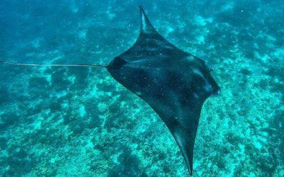 Inilah Peralatan Snorkeling Bagi Pemula