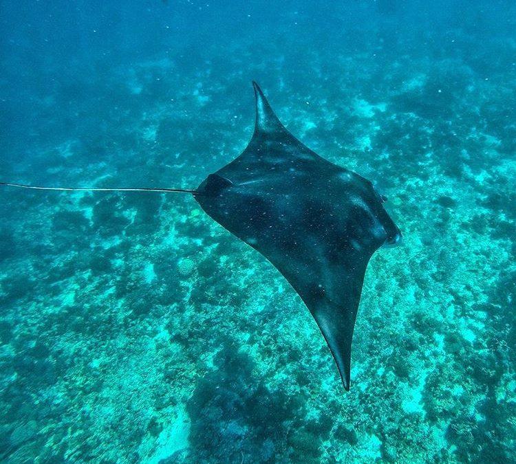 Spot Snorkeling di Manta Point, sumber ig bacalaodisfrazao